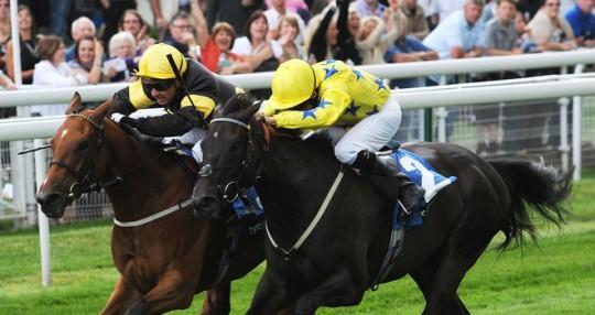 Jamaican Bolt Racehorse - Geoffrey Oldroyd Trainer - Robert Tart Jockey - Newcastle Racecourse  - Horse Racing Tips, Selections, News & Reviews.