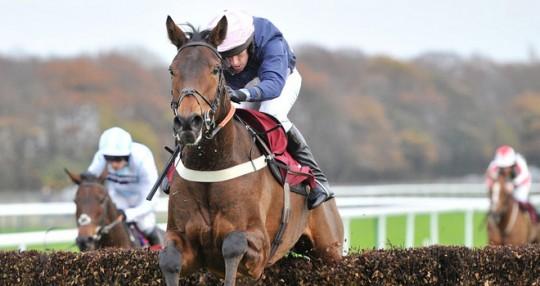 Mr Moonshine Racehorse - Sue Smith Trainer - Ryan Mania Jockey - Haydock Racecourse - Horse Racing Tips, Selections, News & Reviews.