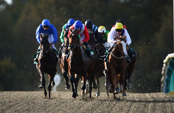 Lingfield Racecourse Betting Tips