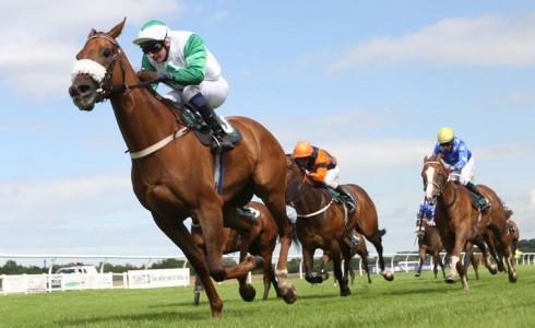 Elusive Prince Racehorse - David Barron Trainer - Lee Newman Jockey - Musselburgh Racecourse - Horse Racing Tips, Selections, News & Reviews.